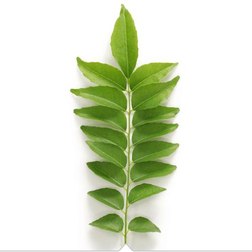 Jeunesse RVL Curry Leaf